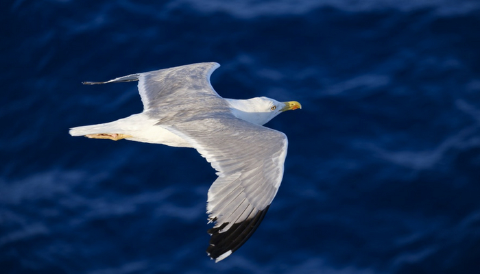 5 planes para disfrutar del otoño en A Mariña Lucense: birding